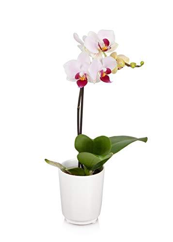 Just Add Ice JAI200 Mini Orchid, Pink