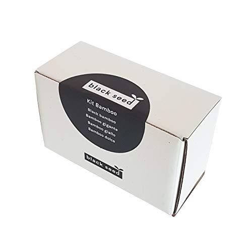 BLACK SEED - KIT BAMBOU - kit de graines - kit de démarrage - variété de bambou géant, bambou noir, bambou doux, bambou jaune