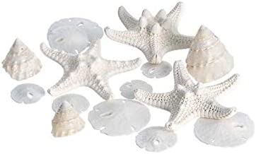 "Miniature White Wedding Nautical Mix | 12 Pieces | Includes White Knobby Starfish, Sand Dollars, Mother of Pearl Turbo Shells All Under 2"" Each 