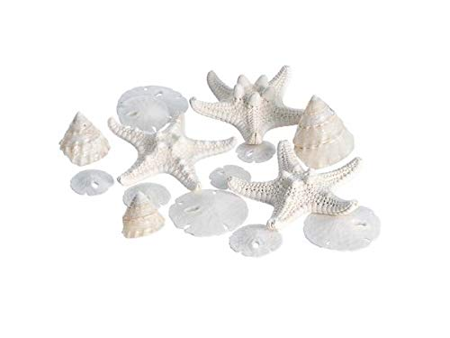 Miniature White Wedding Nautical Mix | 12 Pieces | Includes Small White Knobby Starfish, Sand Dollars, Mother of Pearl Trochus Shells All Under 1 1/2' Each | Plus Free Nautical Ebook by Joseph Rains