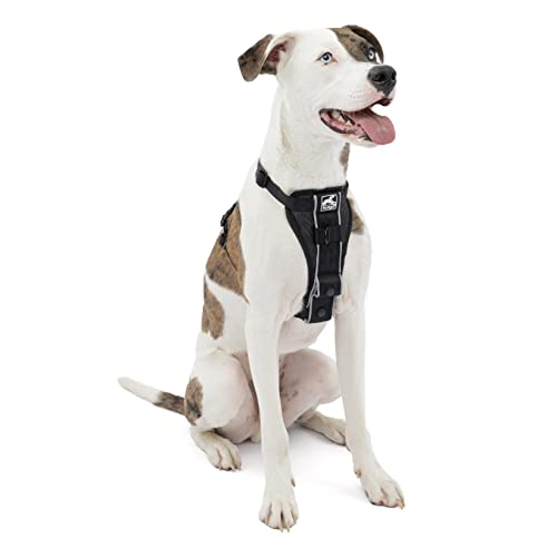 Kurgo Dog Harness   Pet Walking Harness   Medium   Black   No Pull Harness Front Clip Feature for Training Included   Car Seat Belt   Tru-Fit Quick Release Style