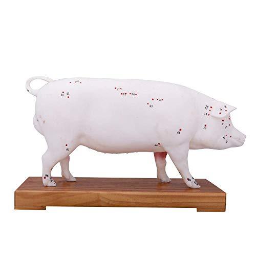 FXQ Akupunktur Modell für Schwein - Tier Anatomie Schwein Akupunktur Modell - Tier Anatomisches Modell Tier Punkte Akupunktur-Modell - für den Unterricht oder Veterinarian\'S Referenz