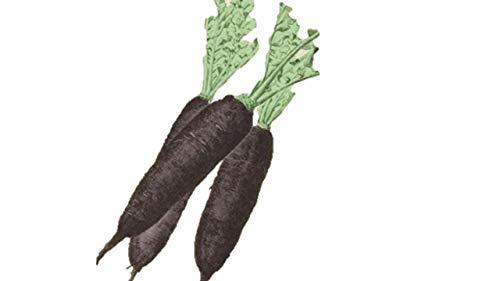 珍しい黒長大根 種 48粒