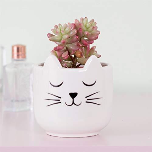 Sass & Belle - Mini maceta en forma de gato