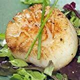 Today Gourmet Foods of NC - Scallops - U10 Dry (5lb Pkg)