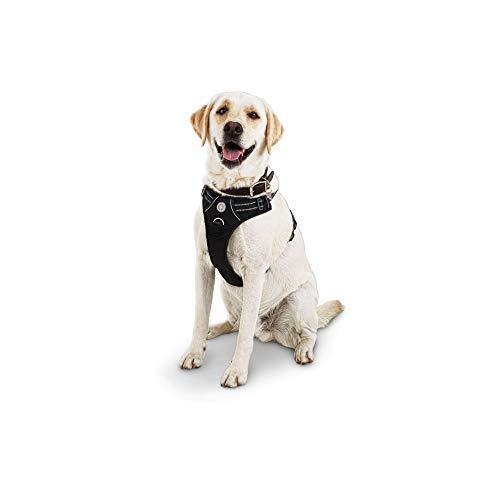 Petco Brand - Good2Go Black Front Walking Dog Harness,...
