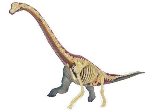 WWKA No.24 Brachiosaurus Modelo anatómico Puzzle Tridimensional 4D Vision Animal Anatomía (Importación de Japón) LLAN