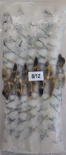 8-12サイズ 尾付 伸ばし海老 ( ブラックタイガー ) 10尾×40P 天ぷら、海老フライ等 冷凍 業務用