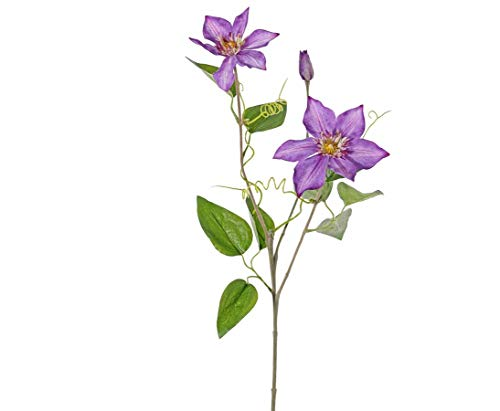 Waldreben Clematis mit 2 Blüten und 1...