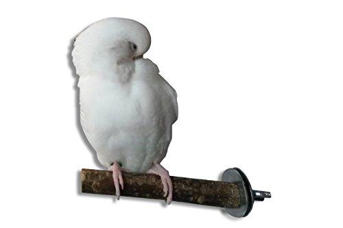 Einzelsitzerstange, die Natursitzstange für Vögel zum Erholen vom Stress im Käfig