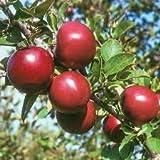 Mela mela rossa frutta amore carne rossa, alberi da frutto in vaso possono essere piantati alberi da frutto 50 Semi/Batterie