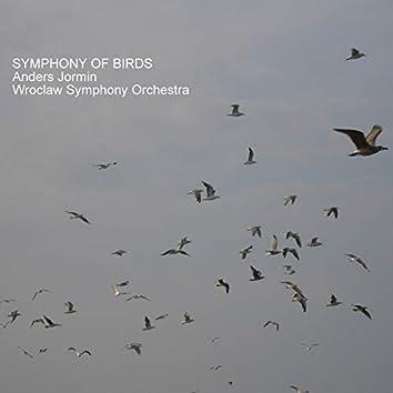 Symphony of Birds