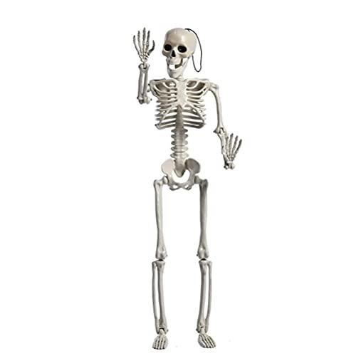 Modelo humano, esqueleto de cuerpo entero para decoracin de Halloween, esqueleto, tamao completo, esqueleto, anatmico, disfraz para fiesta en casa