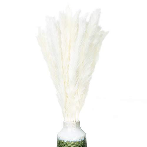 Pampasgras (Cortaderia selloana) natürlich getrocknet, haltbar, Dekoration Deko Blumen (Hochzeit, Events, Anlässe) Inneneinrichtung, Interior (zu Hause, Wohnzimmer) Boho-Chic - Länge ca 70 cm Weiß