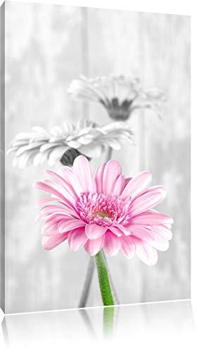 schöne Gerberas bei Tageslicht schwarz/weiß Format: 60x40 auf Leinwand, XXL riesige Bilder fertig gerahmt mit Keilrahmen, Kunstdruck auf Wandbild mit Rahmen, günstiger als Gemälde oder Ölbild, kein Poster oder Plakat