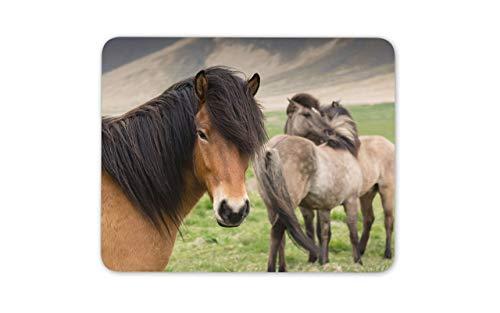 Isländische Ponys Maus Matte Pad - Pferd Pony Reiter Mädchen Kinder Geschenk # 15036