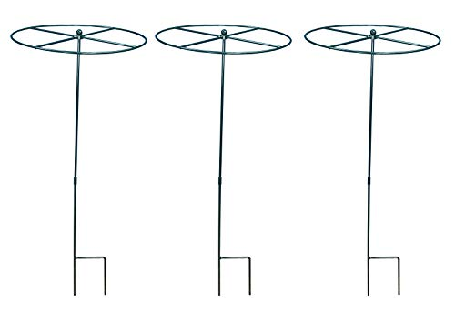 Grow Through Metal Circular Plant Supports 100cm x 40cm (Set of 3)