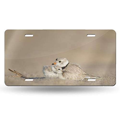 Doinh Twee Knuffelige Vogels License Plaat Gepersonaliseerde Eenzijdige Printing License Plaat Voor CarAluminum Novelty License Plates12x6inch