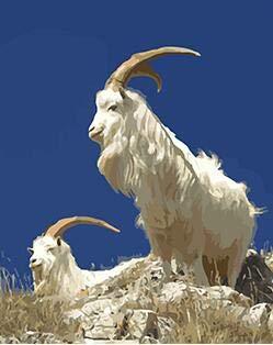 Conjunto de cabra montés para dibujar por números imágenes de animales de arte para la decoración del hogar de la sala de estar 40x50cm