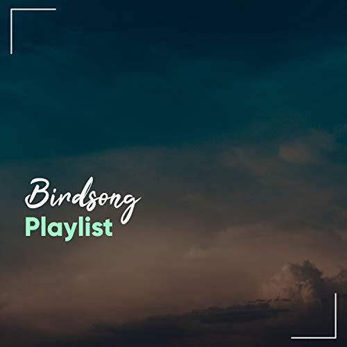 Spiritual Natural Birdsong Playlist