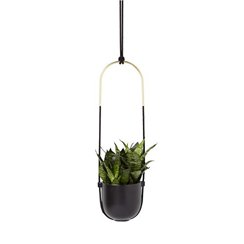 Umbra Bolo Wall and Ceiling Planter – Hanging Flower Pot Plant Holder for Wall and Ceiling, Great for Live Plants, Succulent Plants, Air Plants, Cactus, Faux Plants and More, Black Ceramic / Brass