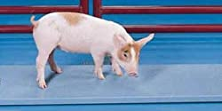 best top rated livestock scales 2021 in usa