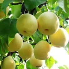 VISTARIC 6: Kaffeebohnen Bonsai Samen Grüne Lebensmittel Bio-Frucht-Gemüse-Samen Refreshing Bonsai-Baum-Pflanze Kaffee-Topf für Hausgarten-8 PC 6