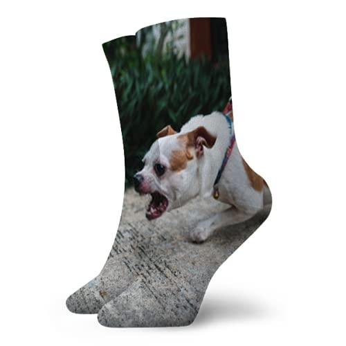 Kteubro Crew Sock Close Up Angry Chihuahua Dog Caliente Acolchado Crew Senderismo Calcetines tamaño libre