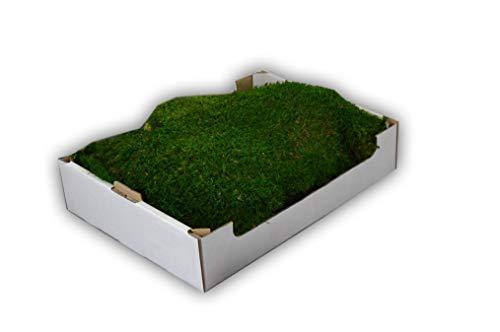Steige Moos konserviertes Flachmoos für Moosbilder Dekomoos Moos für die Dekoration haltbares echtes Moss für die Weihnachtsdeko Osterdeko Herbstdeko Deko