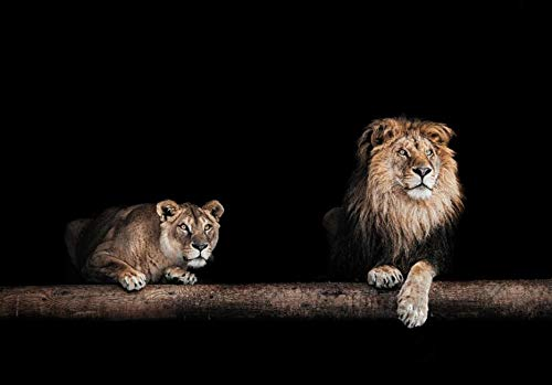 N / A Night lion African wild animal painting on canvas wall art beast decoration posters and prints living room frameless decorative pictures of wild animals A23 70x100cm