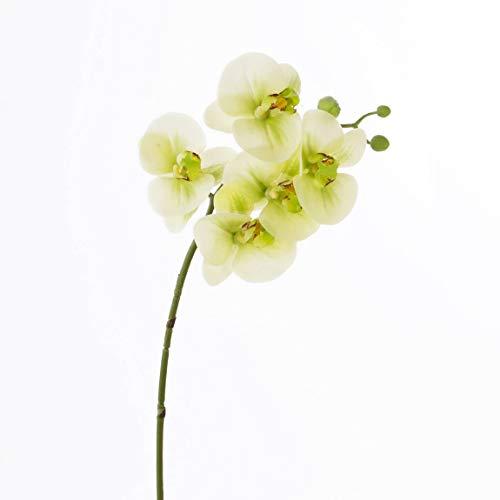 artplants.de Set de 3 x Rama de phalaenopsis Artificial Emilia, Tacto Real, 5 Flores, Crema-Verde, 60cm - Varas de orquídea - Plantas de imitación