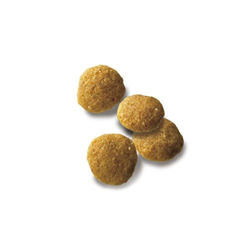 ピュリナワンシニア犬用(7歳以上)室内飼犬用お腹の健康から体重ケア小粒チキン2.1kg(700g×3袋)[ドッグフード]