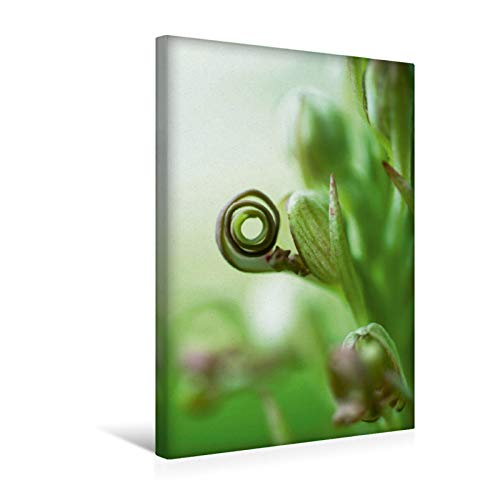 Premium - Lienzo de 30 cm x 45 cm de alto, muy cerca de dran – una orquídea Graciosa imagen sobre bastidor, imagen sobre lienzo auténtico, impresión sobre lienzo (CALVENDO Natur);CALVENDO Natur
