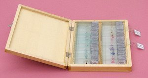 SEOH Microscope Slides Prepared Microbiology King Set of 100