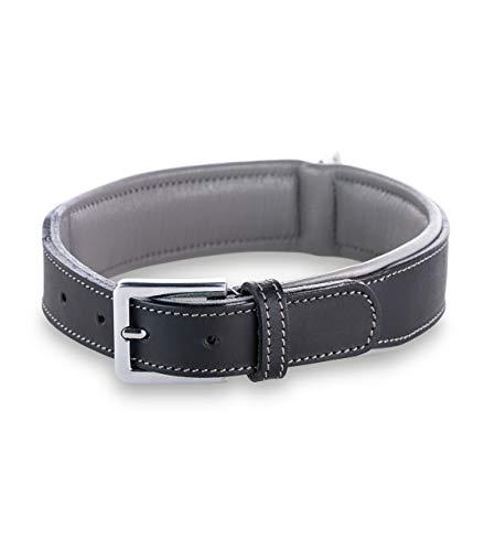 Jack & Russell Premium Hunde Leder Halsband Amy - Lederhalsband aus Echtleder mit Original J&R Prägestempel - robust & elegant (XS, Schwarz/Grau)