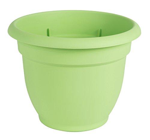 Bloem ap0625 15,2 cm honing Ariana pot