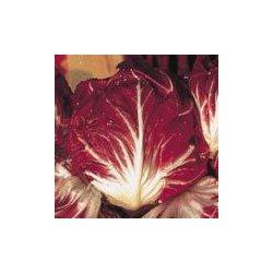 Les Graines Bocquet - Graines De Chicorée À Large Feuille Rouge De Vérone - Graines Potagères À Semer - Sachet De 4Grammes