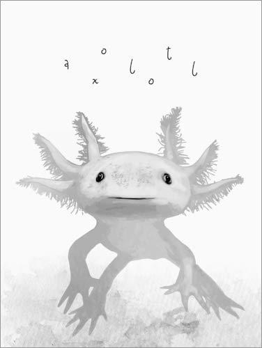 Poster 50 x 70 cm: Axolotl von Mandy Reinmuth - hochwertiger Kunstdruck, neues Kunstposter
