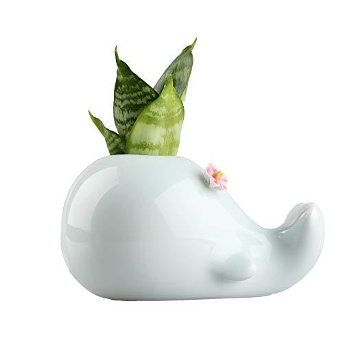 NCYP Celadon smalto di porcellana ceramica Whale con fiore sulla testa piccola dimensione vaso vaso bottiglia idroponica vaso di fiori 12x 6x 8cm Sky Teal