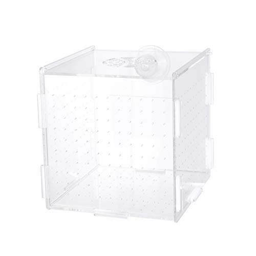 Balacoo fischzuchtbox-isolierbox brutkasten brutkasten Aquarium fischzuchtboxen teiler brutboxen zubehör für kleine babyfische Garnelen clownfisch Guppy-großer saugnapf