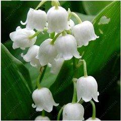 100 pcs/sac Muguet Graines de fleurs, Bell Orchid Seeds, l'arôme riche, Bonsai Balcon fleurs pour la maison 5 plantes en pot