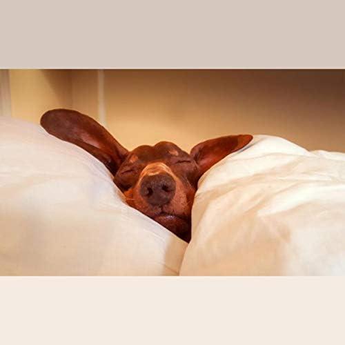 Deep Sleep, Yoga Music & Spa