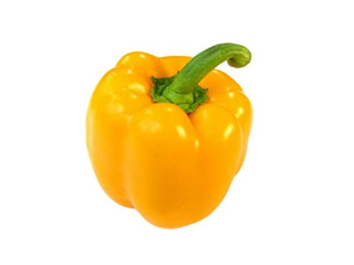 7 POD PRIMO YELLOW 10 Pure Graines de Chili Piments - LES FRUITS NE SONT PAS INCLUSES