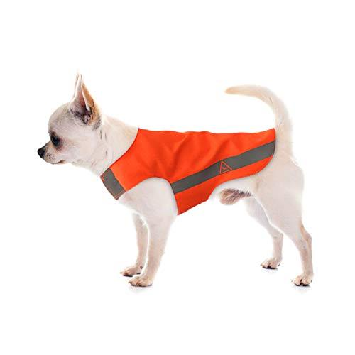 N/A Ropa para Perros Mascotas Ropa para Perros Ropa De Peluche Primavera Y Otoño Delgado Pequeño Oso Beagle Hiromi Chanel Mascota Camisa De Verano De Dos Piernas Chaqueta para Perros