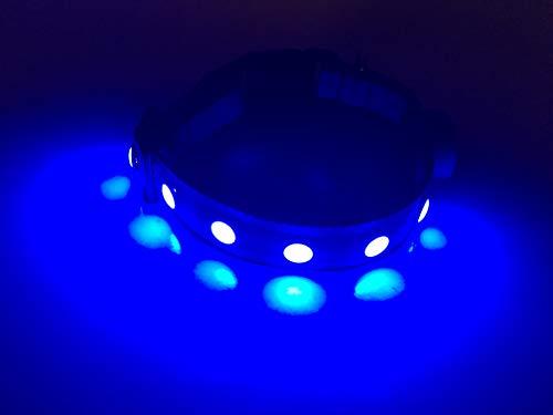 Wags Forever - Collar para Mascota con 5 Luces LED Reflectantes para el día de la Noche