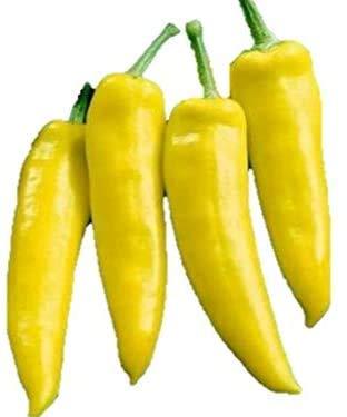 珍しい ハンガリー黄色唐辛子 種 18粒