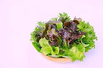 Shop Meeko Casa Giardino - lattuga varietà mix - per la coltivazione indoor e balcone - semi
