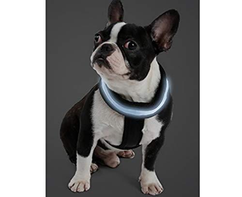 Doglemi Honden LED-lamp servies halsband, Large, blauw