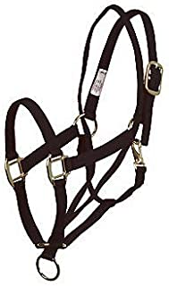 anti pull halter horse