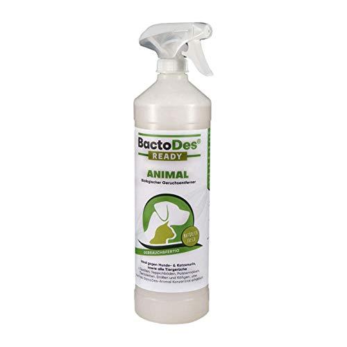BactoDes Animal Ready – Eliminador de olores en espray, Listo para Usar, Limpiador enzimático contra la orina de Gatos, orina de Perros, olores de Animales